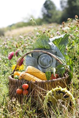 Korb mit Gemüse auf Wiese