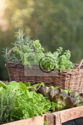 Krauter Und Salat Im Hochbeet Am Balkon Fototapete Fototapeten