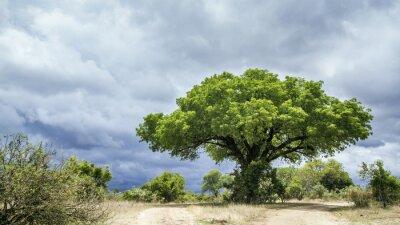 Fototapete Krüger Nationalpark Landschaft, Südafrika