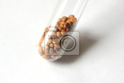 Kultiviert Rettichsamen in einem Reagenzglas
