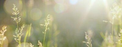 Fototapete Kunst Herbst sonnigen Natur Hintergrund