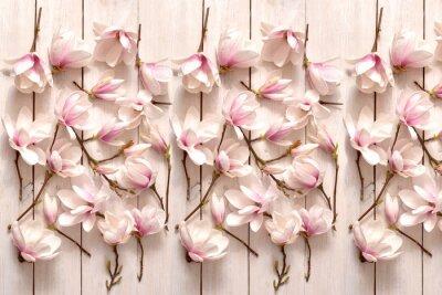 Fototapete kwiat magnolii, kwiat, roślina, biała, beuty, galąź, drzewo magnolii, kwiatowy, fiolet, kwitnienie, flora, botanika, ornament z magnolii, kompozycja magnolii, układ kwiatów magnolii, pąki magnolii, fl