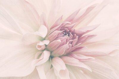 Fototapete Kwiat ze ślubnego bukietu, delikatne płatki, ujęcie makro.