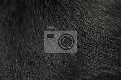 Fototapete Labrador Hund Pelz Hintergrund