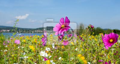Landschaft Im Sommer Bunte Blumenwiese Mit Sonnenblumen Und