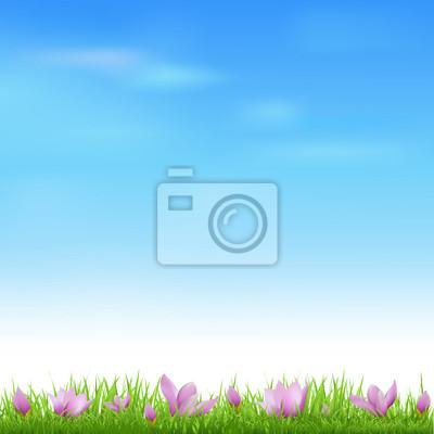 Landschaft mit Gras und Crocus