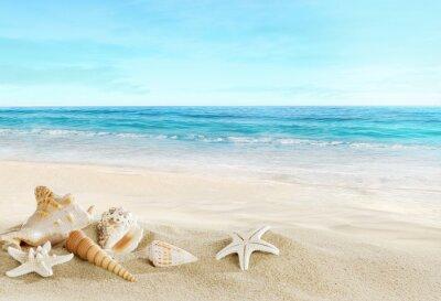 Fototapete Landschaft mit Muscheln am tropischen Strand