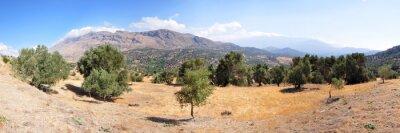 Fototapete Landschaft mit Olivenbäumen auf der Insel Kreta