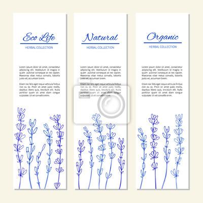 Fototapete Lavendel Blumen Isoliert Auf Einem Weißen, Vertikale Banner,  Etiketten, Hand Gezeichnet Doodle