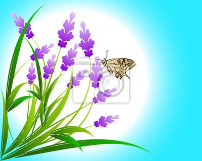 Lavendelblüten auf blauem Hintergrund