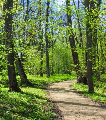 Fototapete Leeren Pfad im Frühjahr Park