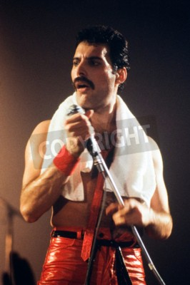 Fototapete LEIDEN, DIE NIEDERLANDE - 27. NOVEMBER 1980: Freddy Mercury Sängerin der britischen Band Queen bei einem Konzert in den Groenoordhallen in Leiden in den Niederlanden
