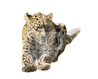 Leopard getrennt auf Weiß