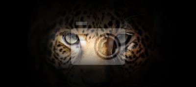 Fototapete Leopard portrait on a black background