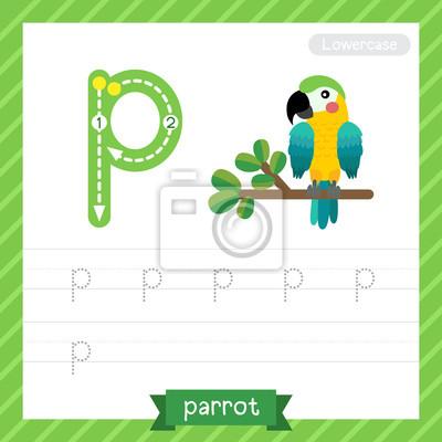 Letter p kleinbuchstaben übungsarbeitsblatt mit papagei für kinder ...