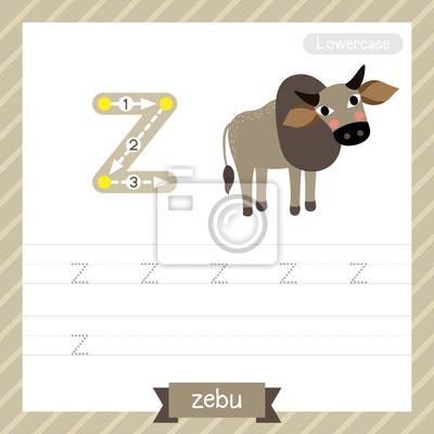 Letter z kleinbuchstaben übungsarbeitsblatt mit zebu für kinder ...