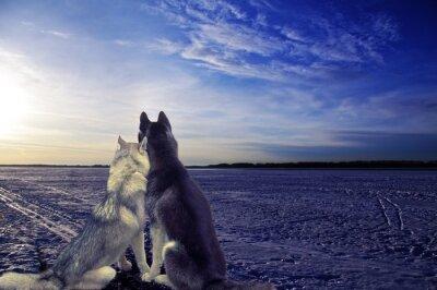 Fototapete Liebhaber - zwei Hunde treffen den Sonnenuntergang