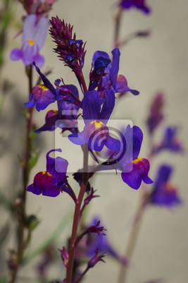garten blumen lila, lila garten blumen in voller blüte fototapete • fototapeten, Design ideen