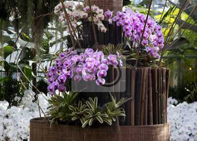 Lila orchidee im garten mit bambus-stick, garten, garten-design ...