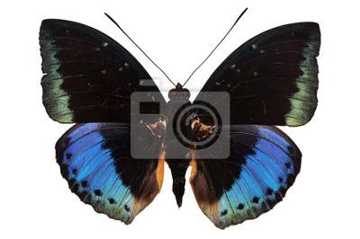 lila Schmetterling auf weißem Hintergrund