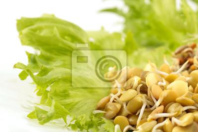 Fototapete Linsen-, Roggen-, Weizen-und Kichererbsensprossen