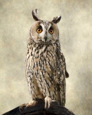 Fototapete Long Eared Owl, Texturen hinzugefügt, um die Eule der Schönheit.