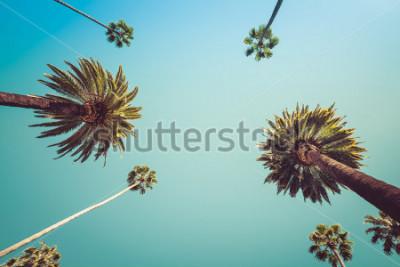 Fototapete Los Angeles Vintge Palm Trees Vintage - klare Sommerhimmel