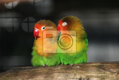 Lovebirds sitting close together on a piece of wood