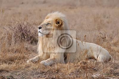 Löwe blanc 4