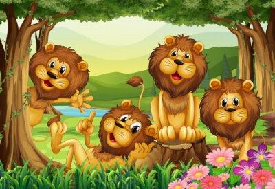 Fototapete Löwe, der im Dschungel lebt