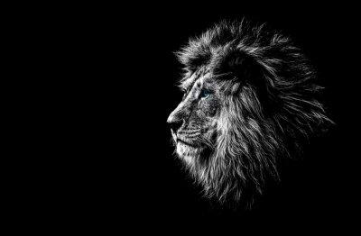 Fototapete Löwe in Schwarz und Weiß mit blauen Augen