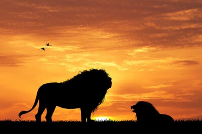 Fototapete Löwe Silhouette bei Sonnenuntergang