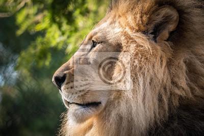 Löwenseitenprofil