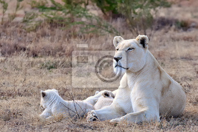Löwin mit ihren Jungen
