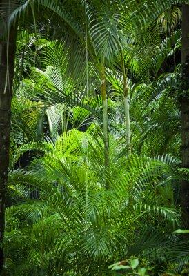 Fototapete Lush grünen Dschungel Hintergrund