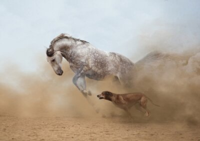 Fototapete  Lusitanian horse