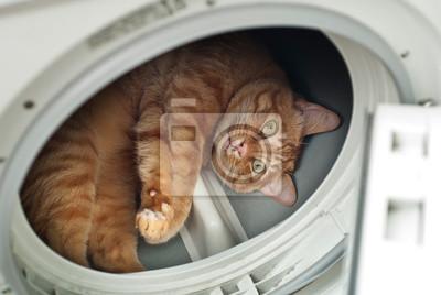 Lustige katze in einer trockner maschine fototapete u fototapeten