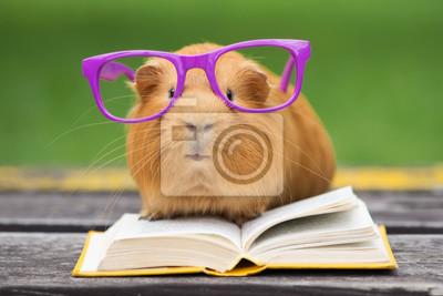 Fototapete Lustige Meerschweinchen in Gläser ein Buch zu lesen