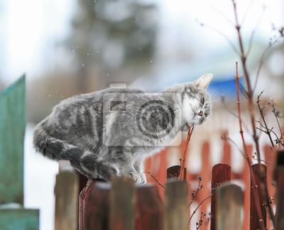 Lustige Schone Katze Sitzt Auf Dem Zaun Und Reibt Sich Gegen