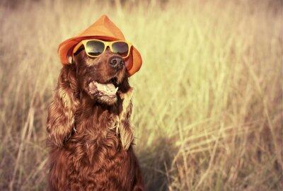 Fototapete Lustiger Hund