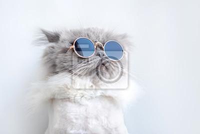 Fototapete lustiges Katzenporträt in der Sonnenbrille