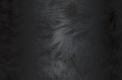 Fototapete Luxury black metal gradient background with distressed natural fur texture.