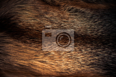 Fototapete luxury fox fur fabric texture with multicolor reflections over surface
