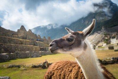 Fototapete Machu Picchu, UNESCO-Weltkulturerbe. Eines der neuen sieben Weltwunder