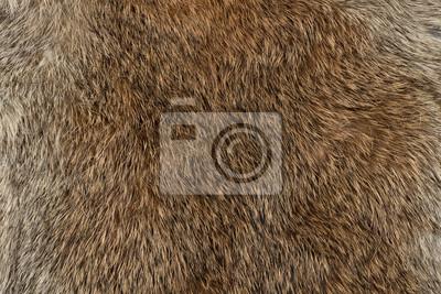 Fototapete Macro close up of rabbit fur