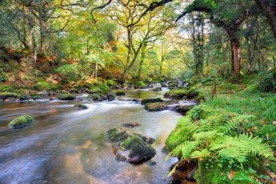 Fototapete Magischer Waldfluss