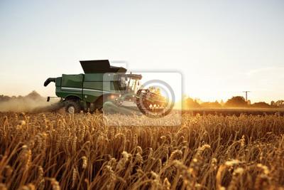 Fototapete Mähdrescher bei der Ernte auf dem Weizenfeld