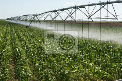Maisfeld und niedrigen Wasserbedarf Bewässerungssystem