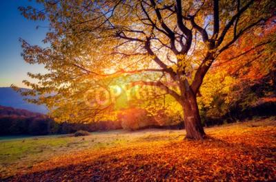Fototapete Majestic allein Buche auf einem Hügel mit sonnigen Balken auf Berg-Tal. Dramatische bunte Morgenszene. Rote und gelbe Blätter im Herbst. Karpaten, Ukraine, Europa. Schönheit Welt.