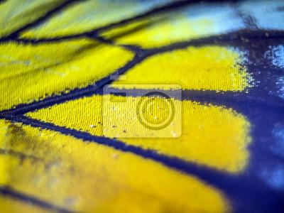 Fototapete Makro Schmetterlingsflügel